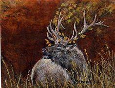 Bull Elk by LaVerne Hill