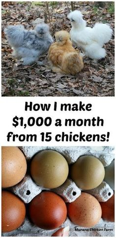 How I make $1,000 a month from 15 chickens!