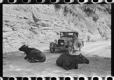 One of the hazards of driving over Kentucky mountain roads. Near Jackson, Breathitt County, Kentucky | Library of Congress