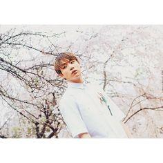 【bts_army_park_kim_jeon】さんのInstagramをピンしています。 《아름다워 😚😍#방탄소년단 #정정국 #정국 #방탄소년단정국 #bts #kpop  #jungkook #rinkakpop  #防弾少年団 #チョンジョングク #ジョングク #防弾少年団ジョングク  #バンタン #桜 #キレイ》