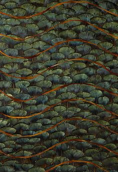 5003940 Emerald Bay Peacock by Schumacher Wallpaper Textures Patterns, Print Patterns, Emerald Bay Lake Tahoe, Arte Plumaria, Feather Wallpaper, Fabric Rug, Wallpaper Online, Design Seeds, Beautiful Places In The World