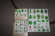 Kosmická výchova-stromy, listy, plody