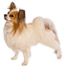 I may be small, but joint pain is still an issue for me.  Check out www.prolabspets.com.