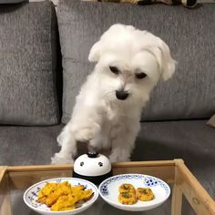 Cute Animal Videos, Funny Animal Pictures, Cute Dogs And Puppies, Baby Dogs, Doggies, Cute Little Animals, Cute Funny Animals, Funny Dog Videos, Funny Dogs