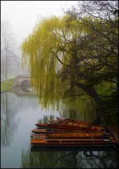 A foggy day in Cambridge by LordLJCornellPhotos