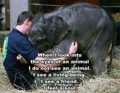 I see a living being. I see a friend. I feel a soul.