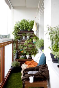 Everything green - fill the balcony plants