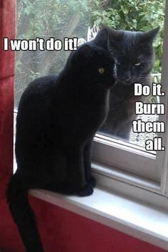We all have our demons...black cats aren't like this. I have had a few the first was a sweetie a clutch but a sweetie and the other well. It could've been one of these two! The blonde in the pic.