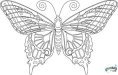 87 Best Butterfly Coloring Pages Images Coloring Books Coloring
