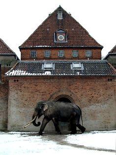 Copenhagen Zoo (own archive)