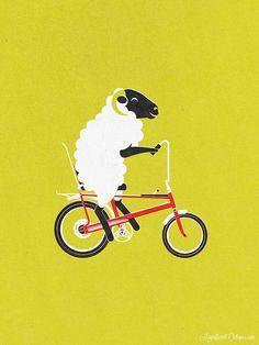 Cycling lamb on a Chopper.  Cool.