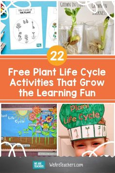The potential of a seed never fails to amaze! Introduce young learners to the plant life cycle with these ideas and hands-on activities. Free Activities, Hands On Activities, Interactive Learning, Fun Learning, Sunflower Life Cycle, Teaching Plants, We Are Teachers, Bloom Where Youre Planted, Paper Plants