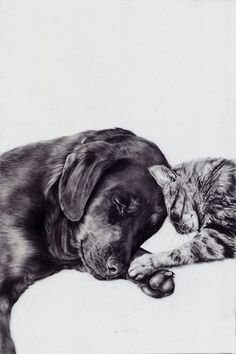 ASCPA by Brittany Schall, via Behance, Graphite on Mylar Crazy Cat Lady, Crazy Cats, Animals And Pets, Cute Animals, Mundo Animal, Tier Fotos, Mans Best Friend, Dear Friend, Beautiful Creatures