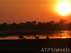 Important rules for surviving a tented safari camp in Africa - ATP Travels