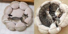 32 Cats Recreate Photos From Their Kittenhood