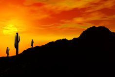 Cactus-Sunset-Dark.jpg