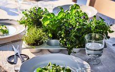 Različito svježe bilje zasađeno u kalup za muffine nalazi se na postavljenom blagovaonskom stolu