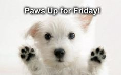 Paws Up For Friday! | Talent Hounds