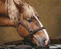 Equine & Heavy Horse Prints