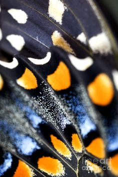 Close-up Butterfly Wings by Iris Richardson - ♥♥