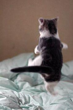 Create a website for your cat @ webhostingbuddha.com