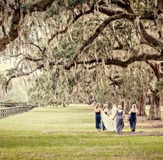 Love those old live oak trees at Boone Hall!