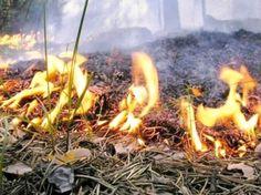 На Київщині, крім північних районів, оголошено про пожежну небезпеку. з посиланням на український гідрометеорологічний центр. #time_ua #новини #Україна #Київ #новости #Украина #Киев #news #Kiev #Ukraine  #EU #Суспільство