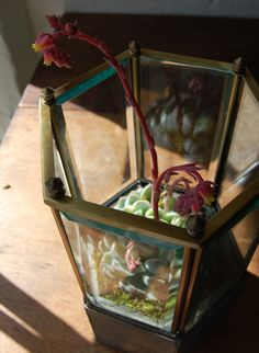 Glass ceiling fixtures upcycled into little greenhouse planters
