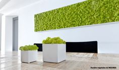 Centre commercial à Mulhouse Moss Wall Art, Moss Art, Plant Wall, Plant Decor, Best Office Plants, Vertical Garden Wall, Vertical Gardens, Garden Wall Designs, Outdoor Daybed