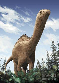 demandasaurus-darwini-a-rebbachisaurid-roman-garcia-mora.jpg 636×900 pixels