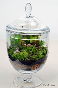 Lush green live moss terrarium in miniature apothecary jar with deer family. via Etsy.