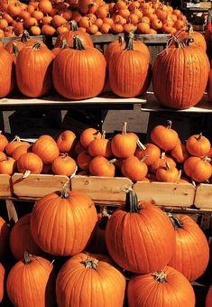 Diy Halloween, Halloween Decorations, Fresco, Pumpkin Farm, Autumn Aesthetic, Fall Harvest, Happy Fall, Fall Season, Fall Decor