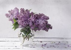 Timelessly lovely purple lilacs (devoted to my mom who loves this flower as much as I do