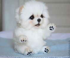 puppies and babies together - puppies and babies ; puppies and babies videos ; puppies and babies together ; puppies and babies pictures ; puppies and babies videos together ; puppies and babies quotes Cute White Puppies, Cute Baby Dogs, Baby Animals Super Cute, Super Cute Puppies, Cute Little Puppies, Cute Little Animals, Cute Dogs And Puppies, Cute Funny Animals, Cute Cats