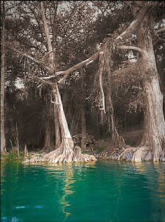 Beautiful river side trees. I see this picture as the water is reviving the trees and grass.
