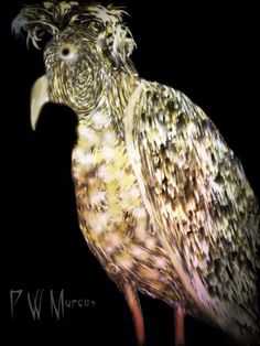 July 13, 2013 - Penny Marcus - Picasa Web Albums  Dandy Bird (Meritum Paint and Pixlr)