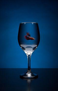betta_wine_glass_by_len_corcino-d5huecf.jpg (900×1407)