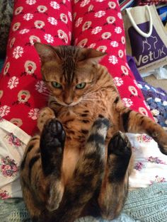 Aryana. Owner: Rebecca Wagstaff (Facebook) June, Facebook, Pets, Animals, Animales, Animaux, Animal, Animais, Animals And Pets
