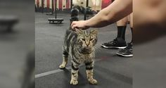 Stray Cat Wanders into Gym to Offer Some 'Help' and Motivation...