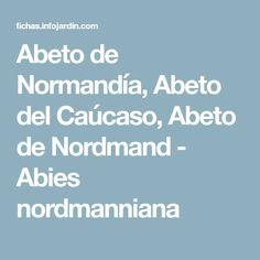 Abeto de Normandía, Abeto del Caúcaso, Abeto de Nordmand - Abies nordmanniana