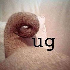 Funny Pug Dog Meme Pun LOL. See it here---> http://pugsareus.net/frompinterest