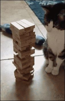 Cat playing Jenga
