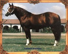 Colonel Freckles (Badger, Dott) ~ He was one of the founding American Quarter Horse Sires. He is my horse's great granddaddy