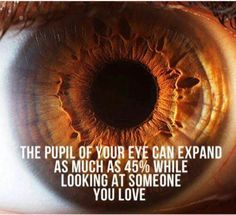 Pupils dilate 45% when you look at someone you love    ,      ,            o       o  see what i did there