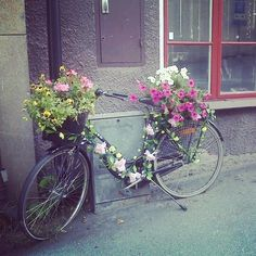 Flowers on a bike in Vaxholm, Stockholm