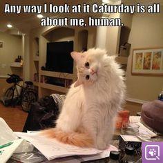 Happy #Caturday!
