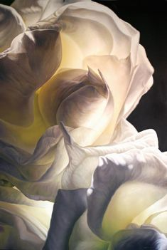 Hermann Försterling • White roses against the light, 100cm x 150cm, Öl-/Harzölfarben on canvas