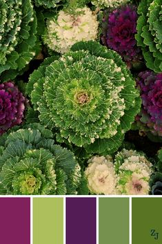Colour pallets for designers Plum Color Palettes, Earth Colour Palette, Colour Pallette, Yarn Color Combinations, Colour Swatches, Favorite Paint Colors, Room Color Schemes, Color Balance, Design Seeds