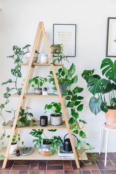 Indoor House plants guide - beginner plants you can't kill 8 #indoorhouseplantsflowers