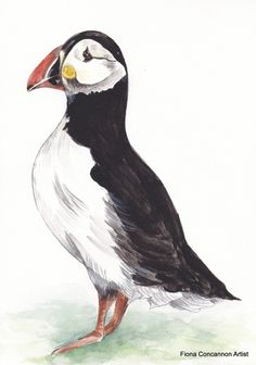 Puffin Wildlife Art, Limited Edition Prints, My Images, Giclee Print, Watercolor Paintings, Whale, Bird, Antiques, Artist